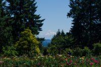 Blick zum Mt. Hood