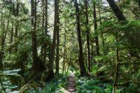 Mt. Rainier Regenwald