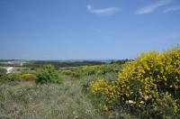 Istrien - Kap Kamenjak